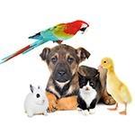 Nat�rliche Tierpflege