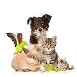 Ungezieferbek�mpfung / Nat�rliche Tierpflege